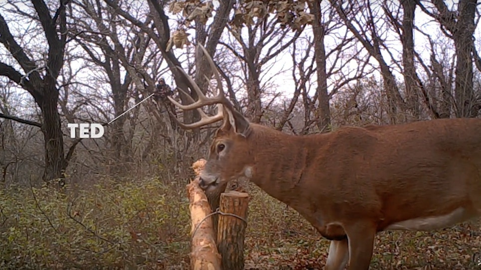 Video: How to Lure Whitetail Bucks With Horizontal Rubbing Posts