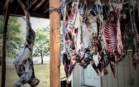 5 Benefits of Eating Wild Game