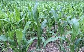 Plant Summer Food Plots For Deer And Turkey