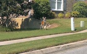 Urban Deer Hunts A Success For West Virginia