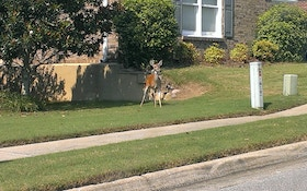 Another Town Planning To Hunt City-Dwelling Deer