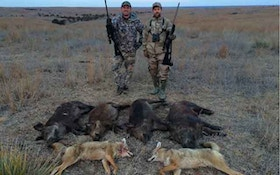 Hunting Oklahoma Coyotes And Hogs!