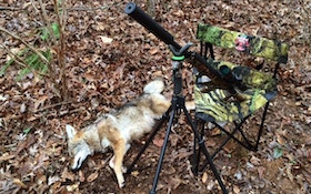 Harvest More Coyotes With A Good Coyote Setup