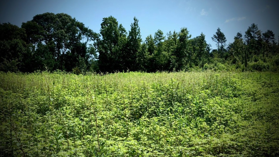 What to Expect When Planting Summer Food Plots