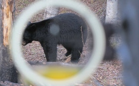 Baiting Black Bears on Public Land