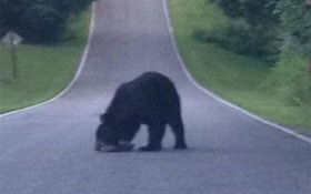 Are Black Bears Back In Indiana?