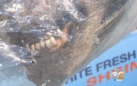 VIDEO: LA Market Sells Raccoons