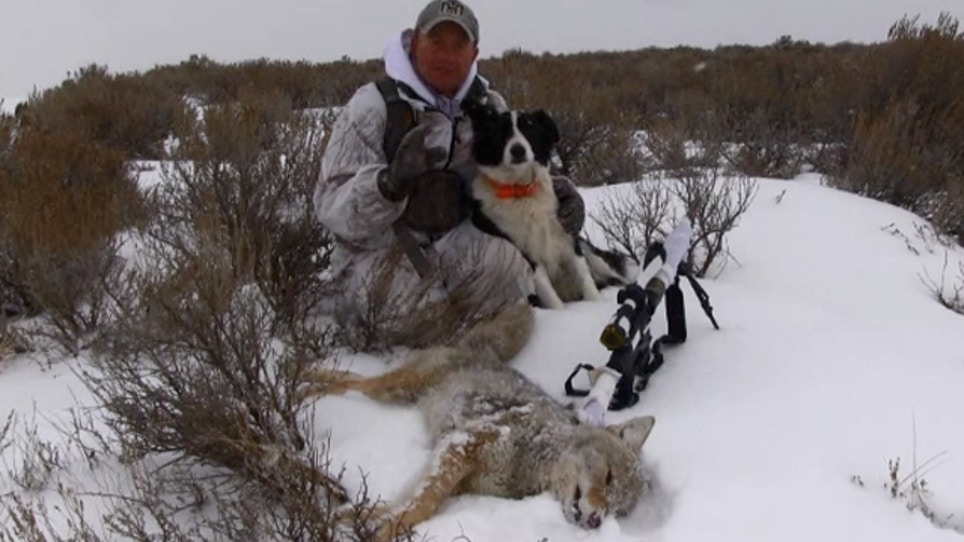 Field Tested: What to Wear When Hunting Snowbound Coyotes