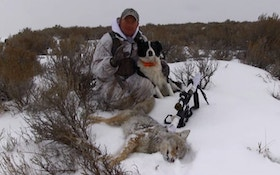 Don't leave your coyote stand too soon