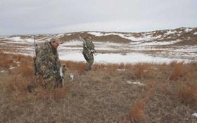 Hunting Predators Using Eye Candy