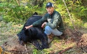 Trapping Ursus Americanus — Aka the Black Bear
