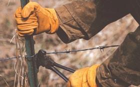 Spring Whitetail Chores