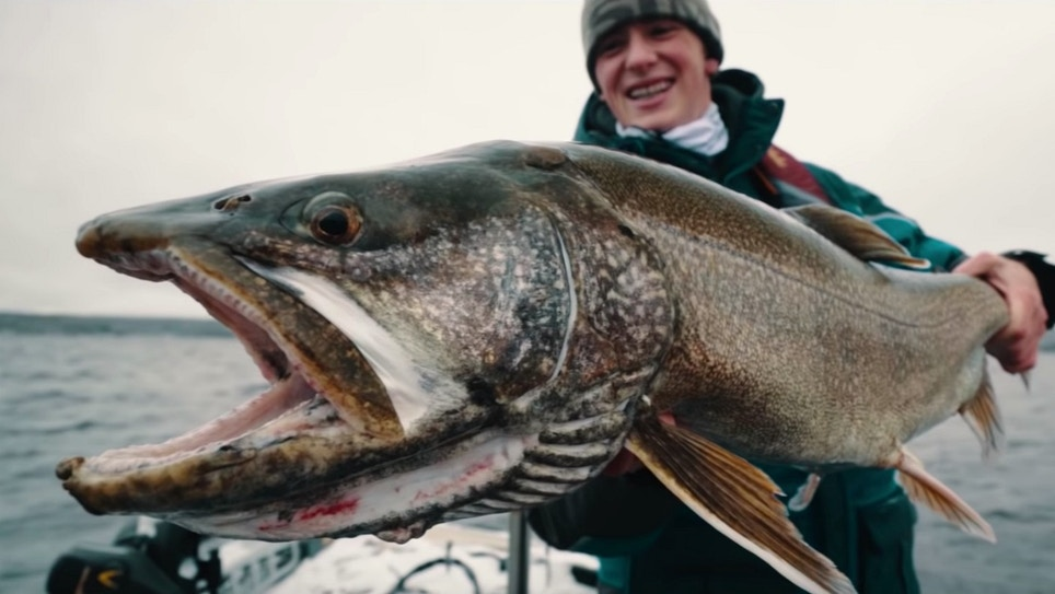 Video: Giant Lake Trout Fishing Reaches Mayhem Levels