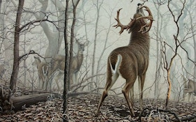 My Favorite Whitetail Painting of All Time