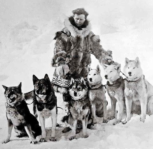 Musher Leonhard Seppala and his legendary lead dog, Togo (far left); ca 1925.