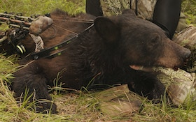 Loaded for Bear — Archery Style