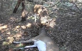 VIDEO: Hunters rescue tangled buck, then get up close and personal