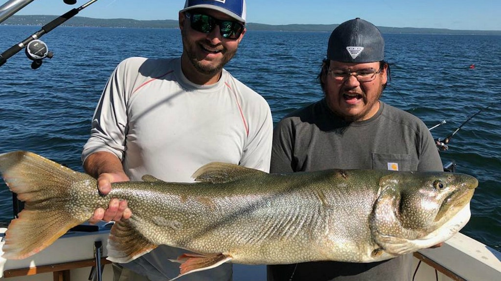 Possible New State Record Lake Trout Released in Minnesota