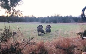 Self-Filmed Video: Bowhunting Wild Turkeys From a Natural Ground Blind
