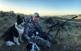 Training a New Coyote Hunting Dog