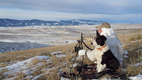 Mark Kayser was looking for a family/decoy dog — and settled on a rowdy border collie he named Sage. (Mark Kayser photo)
