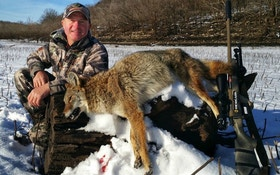 Is It Game Over if a Coyote Sees You?