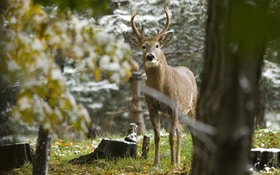 Hunter Harassment: Man Sprays His Brother's Hunting Area With Deer Repellent