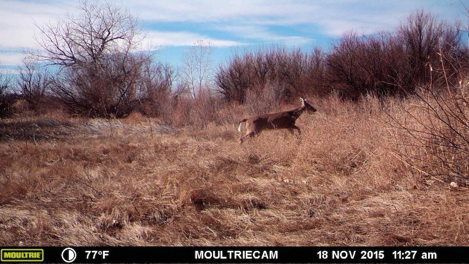The Life Of A Bowhunter In Deer Season: Day 15