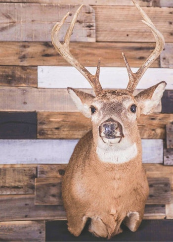 The author has tagged bigger bucks, but none more special than his first.