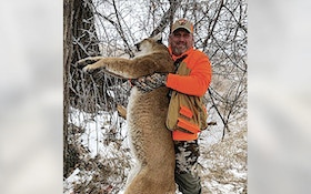 Mountain Lion Killed After Charging Pheasant Hunter