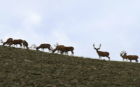 Utah Cancels Program to Relocate Urban Deer Due to CWD Concerns