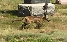 Police Deny Chupacabra Roaming New Hampshire Cemetery