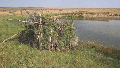 The author constructed this practical natural blind while bowhunting Montana pronghorn, using materials found near an active waterhole. He would later tag a buck from the site.