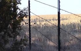 VIDEO: Bowhunting Nebraska Public Land Longbeards