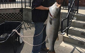 Angler Sets New York Record For Striped Bass