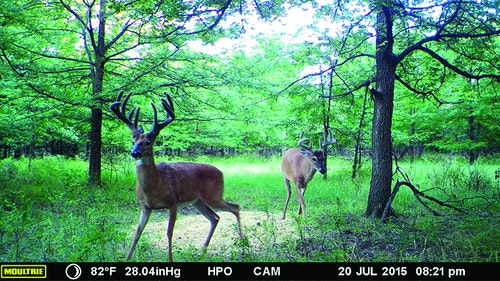 Cody Kuck, owner of Heartland Pride Outfitters, sent the author many trail-camera pictures leading up to the hunt, including this summer picture of the author's eventual harvest. Photo: Heartland Pride Outfitters