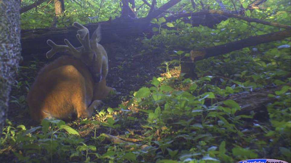 Six Ways To Improve Bedding Areas For Deer