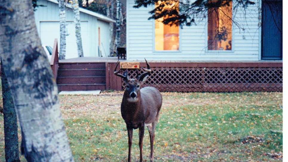 Find unpressured, mature bucks in the suburbs