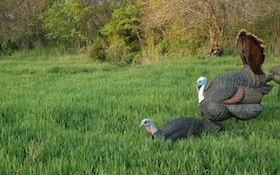 How To Pick and Position Turkey Decoys Perfectly