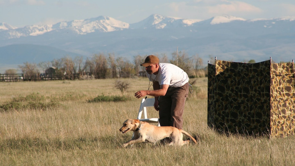 How To Keep Your Gundog From Breaking