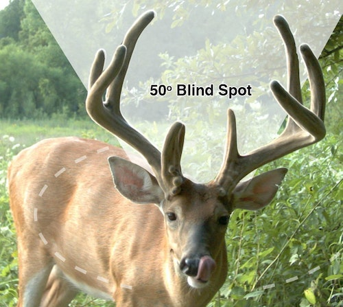 A deer can see nearly 310 degrees around its head and can pivot its ears and even turn each ear in a different direction at the same time to locate the source of sounds.