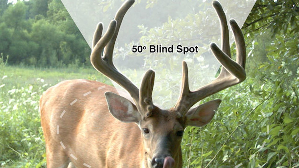 Scientific Facts About How Deer See and Hear