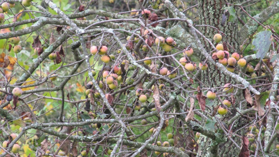 Best Fruit Trees To Plant For Deer