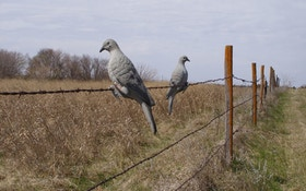 How To Shoot More Doves On Opening Day