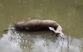 Deer Health: The Link Between Water And Deer Disease