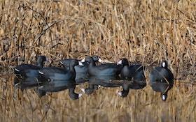 Five Fantastic Duck Spreads