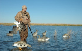 How And Why To Hunt Specklebelly Geese