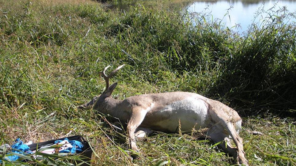 Hemorrhagic Disease: Deadly Deer-Killing Viruses Push North