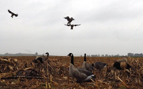 Canada Goose Hunting: How To Finish The Tough Flocks