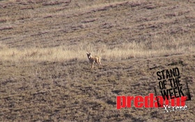 VIDEO: Almost a coyote double
